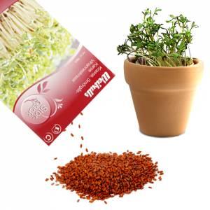 Gartenkresse | Kressesamen 30 g